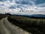Feldweg oberhalb von Scheibenberg