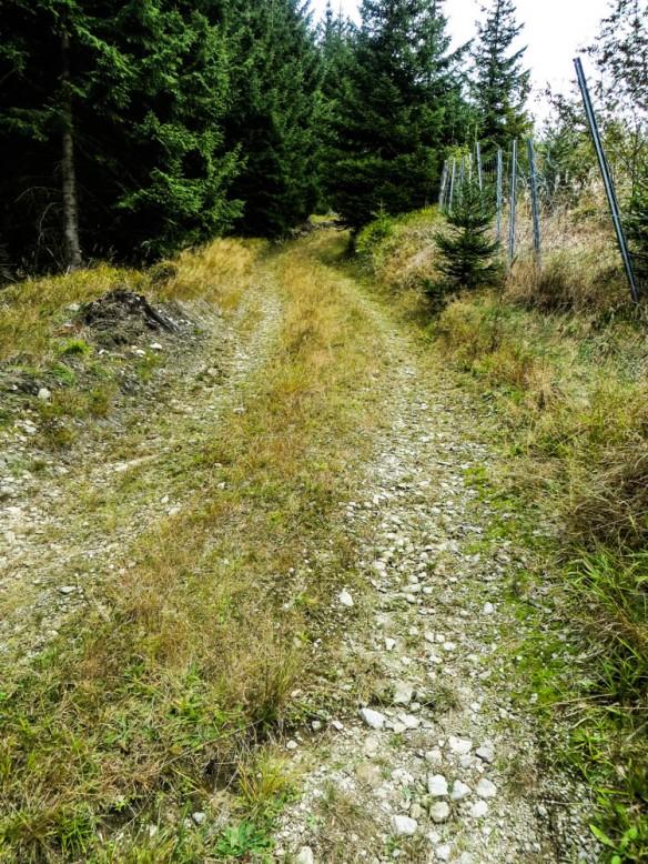 wir verlassen die breiten Wanderweg und nehmen ein Steilstück bergauf...