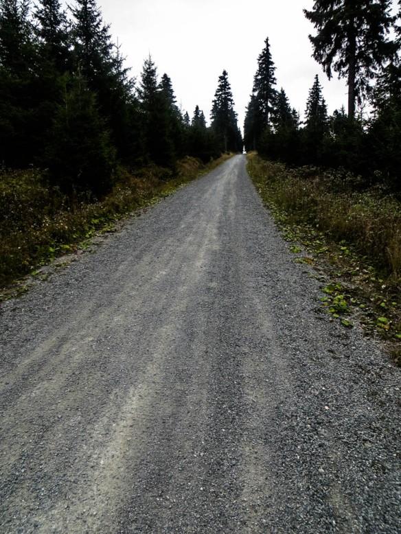 die letzten Meter auf dem Reitsteig hinauf zum Fichtelberg